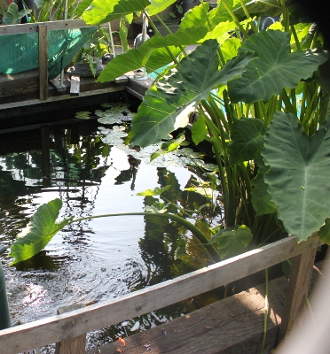 Water Garden Services in Los Angeles, CA | Koi Pond Supplies
